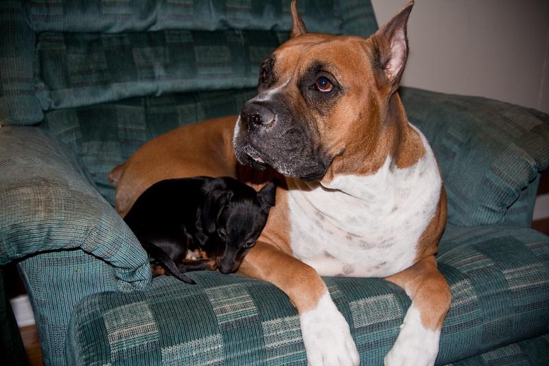 Kaylee curls up with Brutus