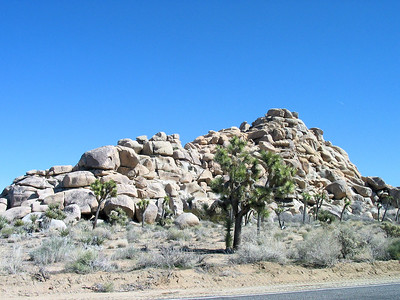 Unlike other smooth rocks in the desert, the Joshua Tree seem more like piles of rocks as they've split so much over time.