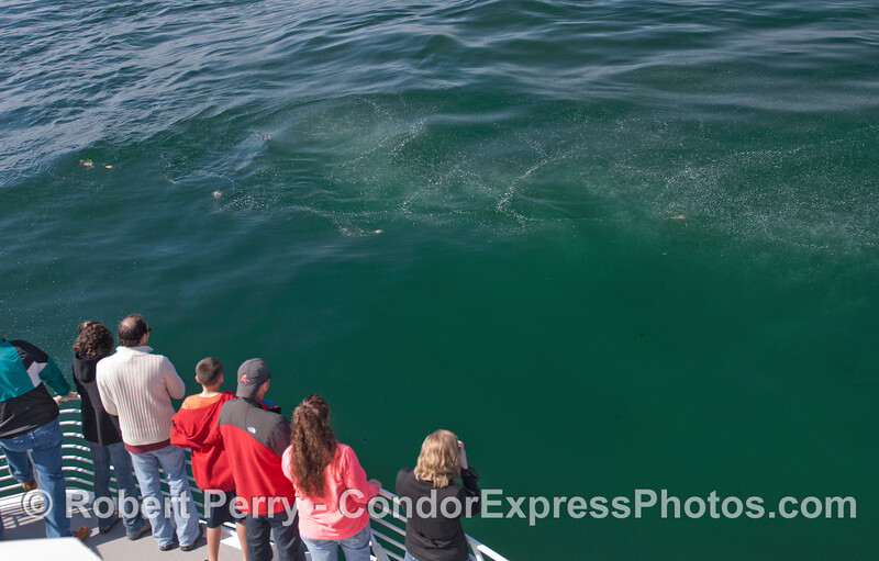 Whalers on board the Condor Express look at natural methane gas bubbling up from the ocean floor.