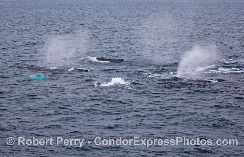 Whales everywhere.