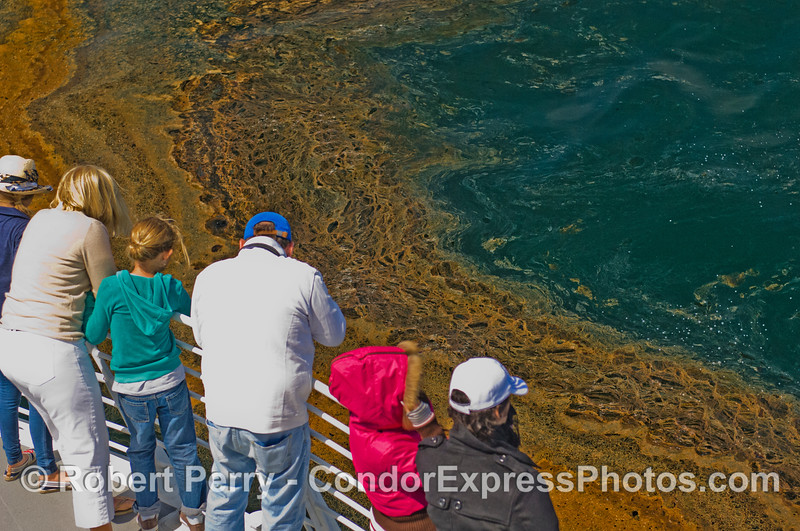 "Whalers on board the Condor Express get a rare treat:  a close encounter with ""mousse.""  Mousse is a mixture of oil, asphalt, decomposed kelp (algin) and air.  The petroleum component of mousse is from natural oil seeps in the sea bed."