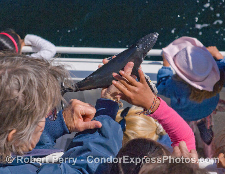 CINC Naturalist Sally shows the kids a model Humpback Whale as the real ones swim around the Condor Express.