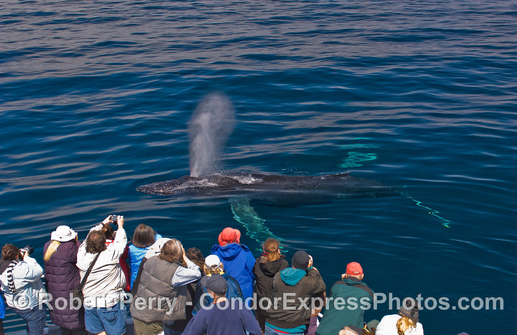 Crystal clear water, bright sun and a very friendly Humpback Whale (Megaptera novaeangliae).  Who's watching who?