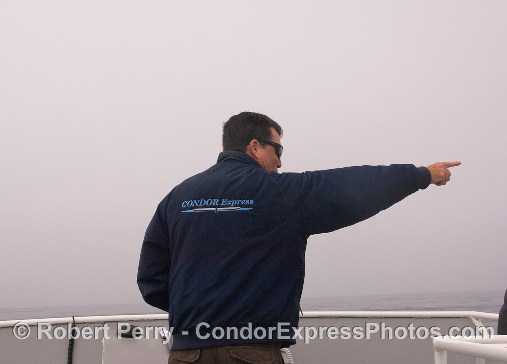 Captain Dave points out one of the many clusters of rafting California Sea Lions (Zalophus californianus) in the Channel.  Dave is trained as a marine mammal rescue person, and has decades of experience with sea lions.