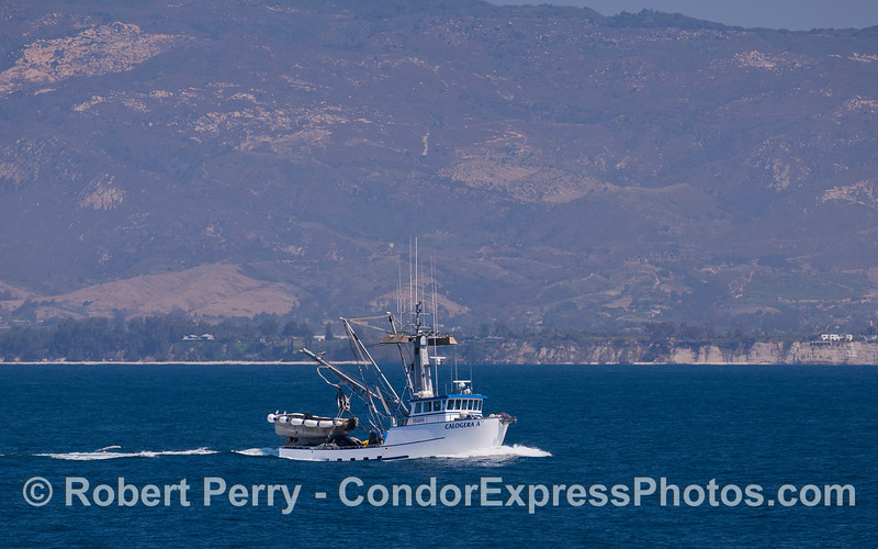 "Squid seiner ""Calogera A"" with the western Santa Barbara coast in the background."