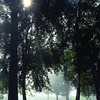 The Sun breaks through the trees as a morning fog burns off in Fort George Park Thursday morning. Citizen photo by Brent Braaten       Sept 8 2011