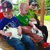 Citizen photo by Chuck Nisbett \Sam Giesbrecht, 2, is intently interested in the baby rabbit he is holding while his friend Zander Carter, 2,tries to keep his from escaping down his leg and Eric Carter, 9, strokes the rabbit on his lap, while visiting Black Spruce Farms Sunday.