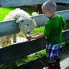 Citizen photo by Chuck Nisbett Zander Carter, 2, feeds a baby sheep while visiting Black Spruce Farm Sunday.
