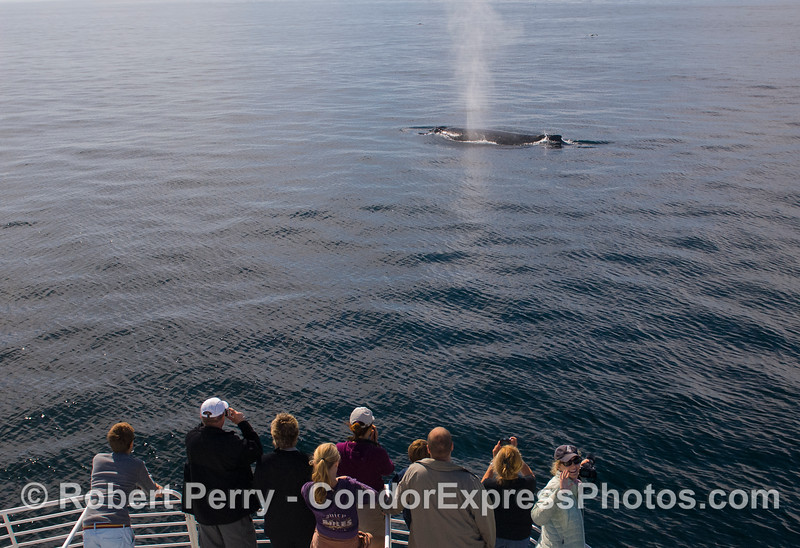 A whale photographer waves at the camera.   :-)