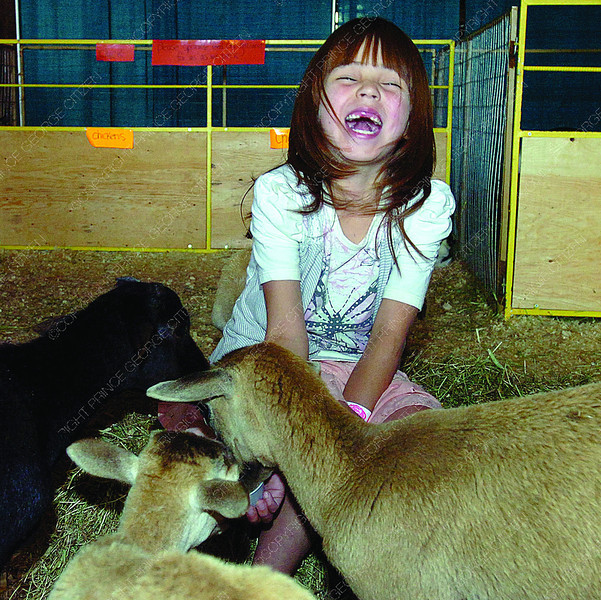 Emma Berle, 6, is tickled as baby goats eat out of her hands at the Black Spruce Farms petting zoo, in the 4-H section of the PGX. Aug 15, 2011. Citizen photo by David Mah
