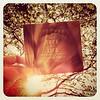 "Despite the new Gaga album, my favorite music acquisition today was Alexandre Desplat's ""Tree of Life"" score"