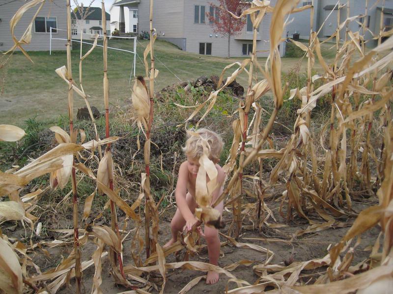 The corn must come down!