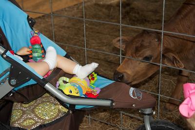 Little calf was checking out Ellen's stroller