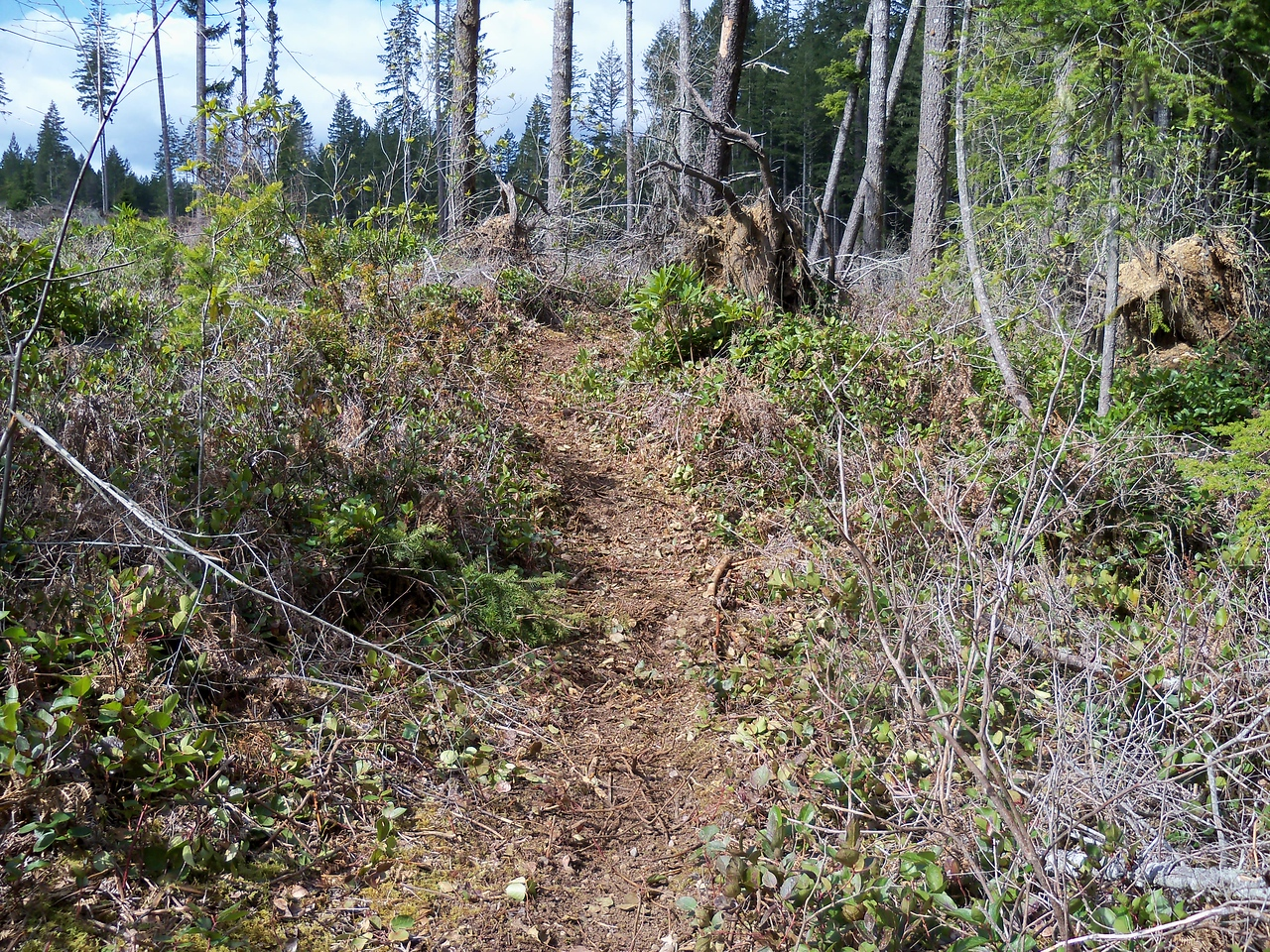 A new trail, all most untouched by Man or motorcycle... For a small fee we'll show where it is...!