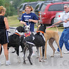 Tribune-Star/Jim Avelis<br /> Meet and greet: Sheila Vallosia and her two Great Danes chat with Cathy Walker and Larry Decker and theirs. To the right is Darrin Nesbitt.