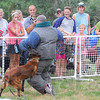 "Tribune-Star/Jim Avelis<br /> Impressive demonstration: Participants in the ""Bark in the Park"" fundraiser were given a demonstrration of Terre Haute Police K-9 officers and their handlers Saturday morning. Here ""Luca"" takes down officer Justin Sears, playing the part of the bad guy."