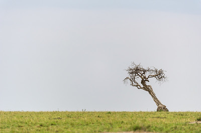 Skew Tree
