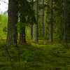 The Swedish Forest is so lush and green, just like in a fairy tale really...