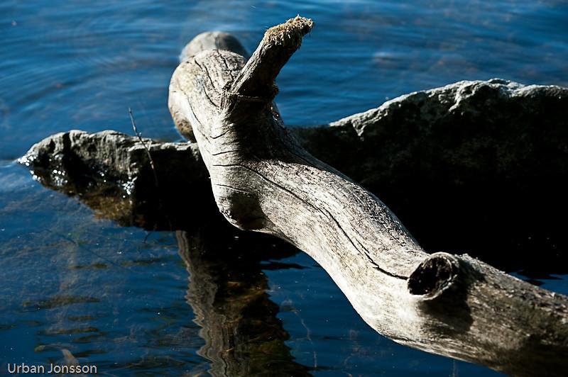 Ekensgrenar blir liggande länge i vattnet.