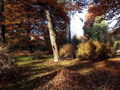 Botanic Garden Cracow autumn 2011