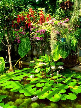Botanic Garden Cracow summer 2011