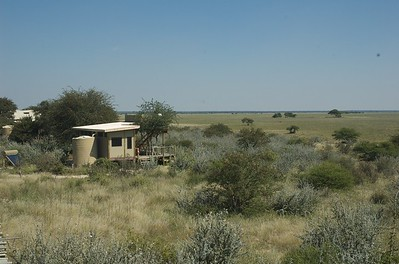Kalahari Plains - Leslie Rowley