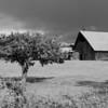 The barn ... B/W.