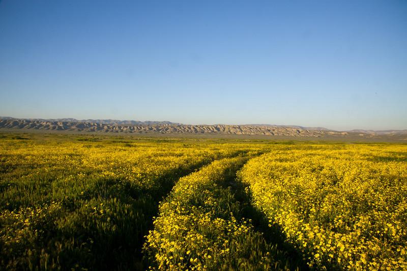 Path through the flowers