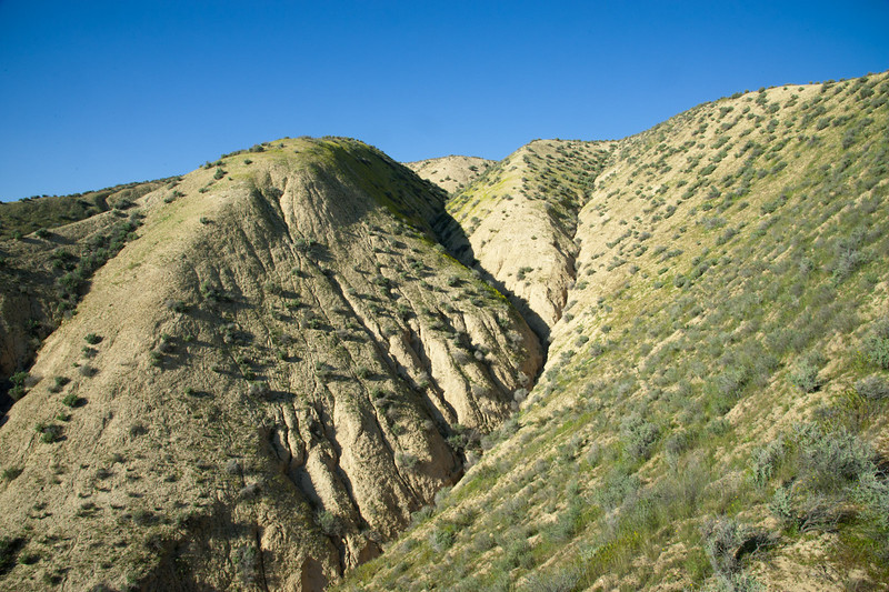 Mixed hillside