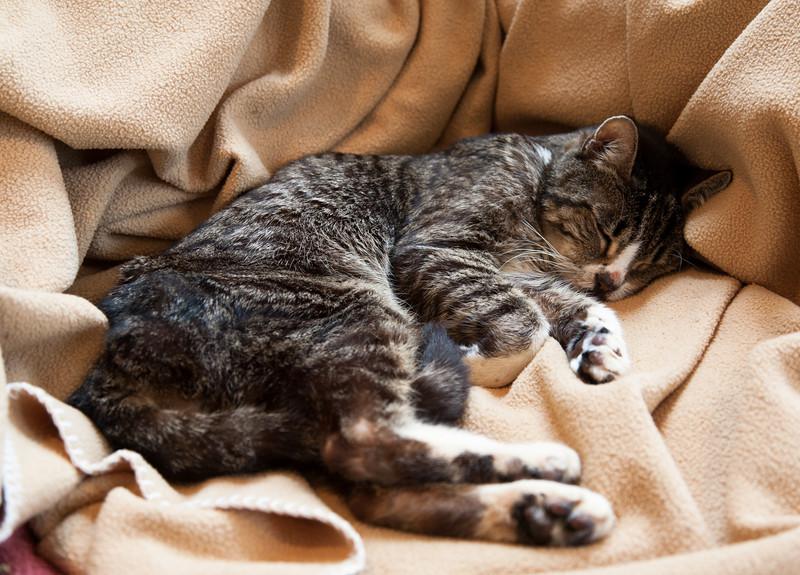 Puss lying on his blanket.