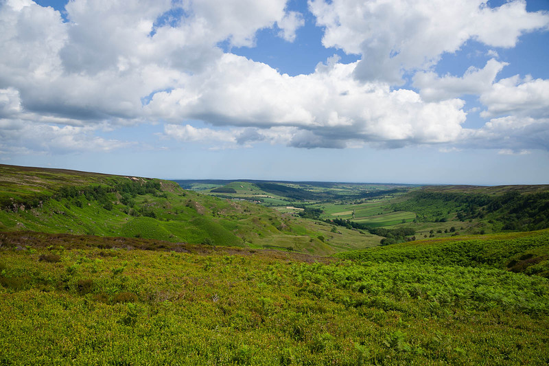 Edge of the moors