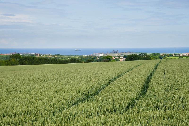 Acres of grain