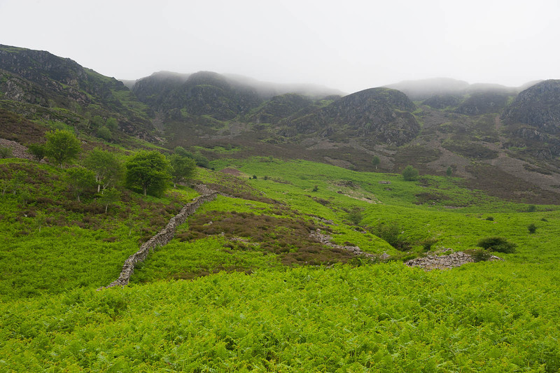 Bracken and rocks above
