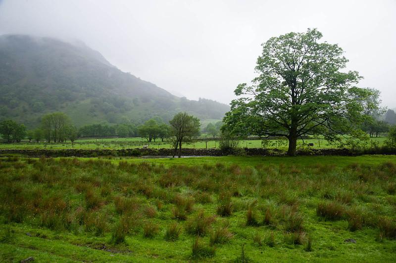 Damp fields