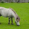 Pony browsing
