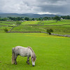 Close-mowed grass