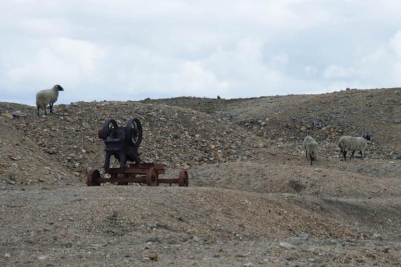Sheep and mining equipment