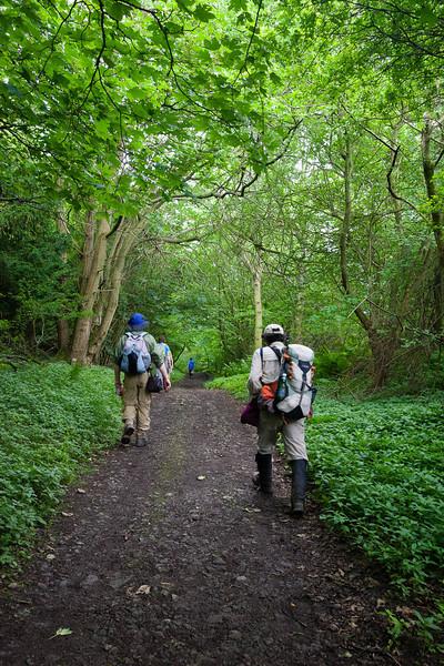 Whitecliffe Wood