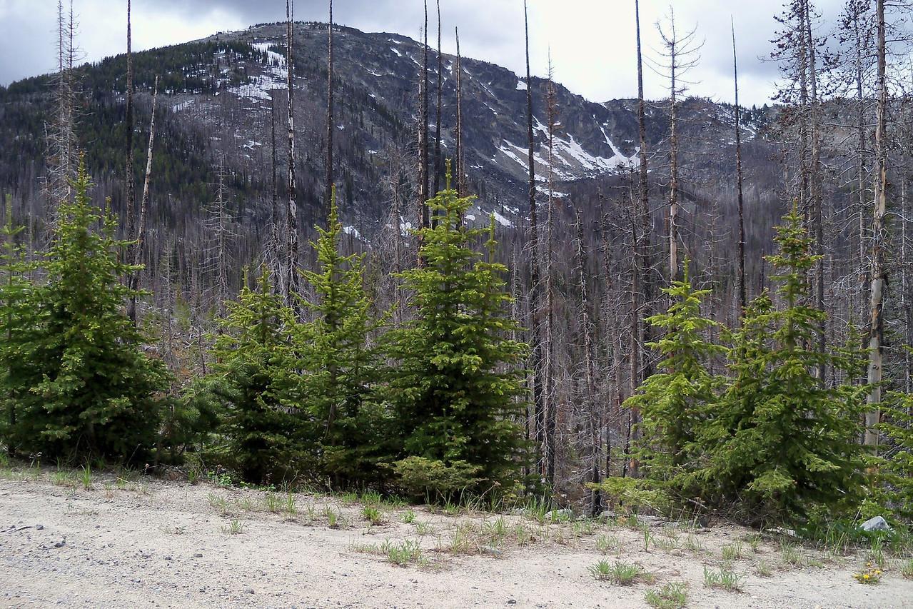 Baldy Pass, 6370 ft.