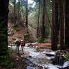 Vicente Creek