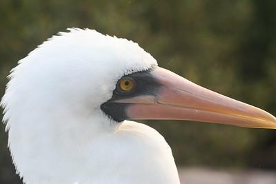 Darwin's Galapagos
