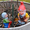 Season's end: A leafless rosebush towers over a pair of gnomes, a harbinger of summers' end.