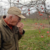 Tribune-Star/Joseph C. Garza<br /> Right off the branch: Jerry Lehman takes a bite out of a persimmon growing in his orchard Dec. 8 at his home.