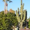 Arizona '11 - 7