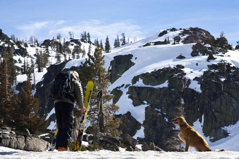 Dog and skis