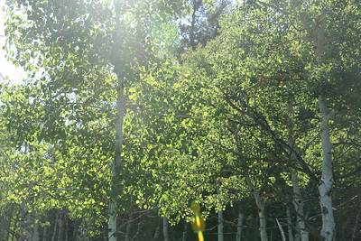 Sun glare aspens
