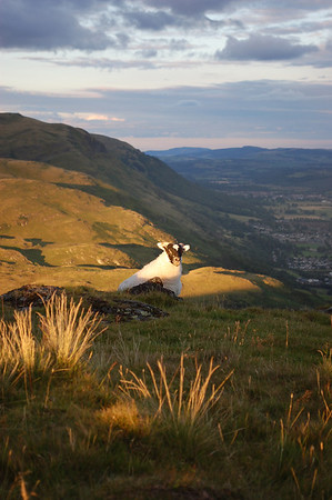 Dumyat in the Evening 17/08/2011