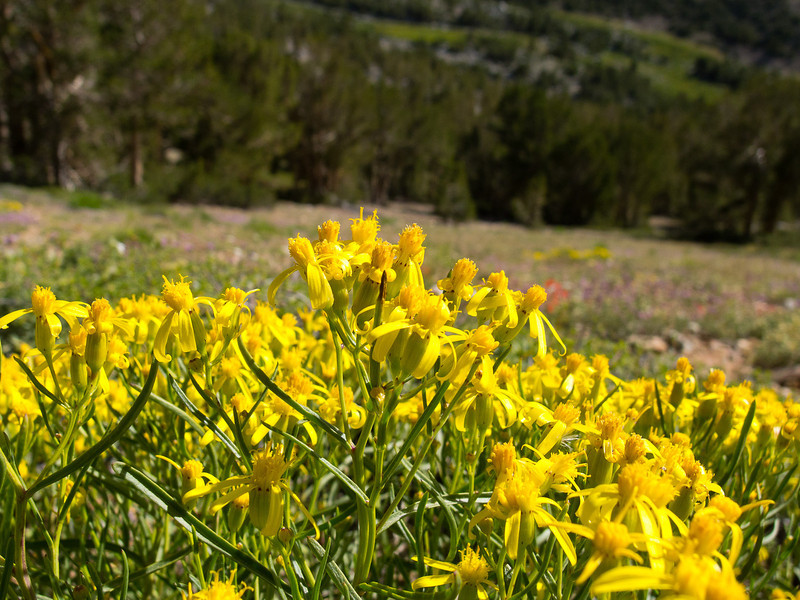 Yellow on the hillside