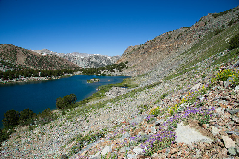 Wildflowers above Green Lake