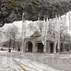 Ice: Icecicles hang from a low tree branch in Collett Park Tuesday morning after a freezing rain event Monday night.